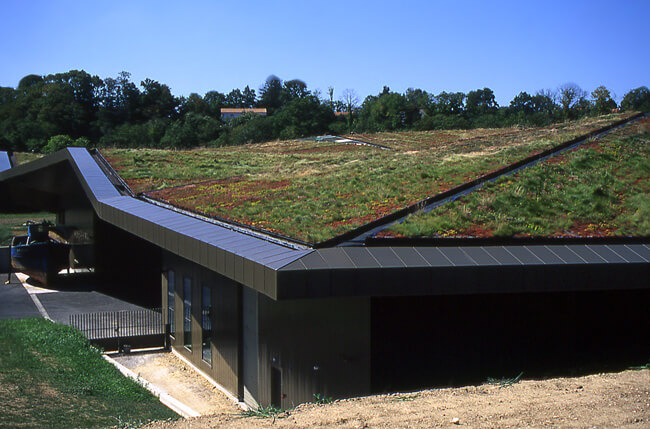 Green Roofs: All You Need to Know